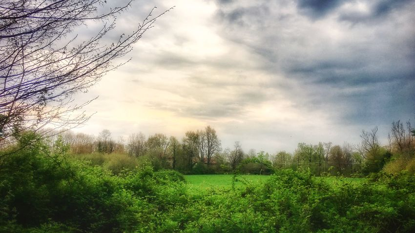 The country. Rural Scene Outdoors Green Color Nature Sky Tree Field Beauty In Nature Tranquil Scene Cloud - Sky Growth No People Plant Day Scenics Landscape Walking Around EyeEm Nature Lover Eye4photography  From My Point Of View in Brianza