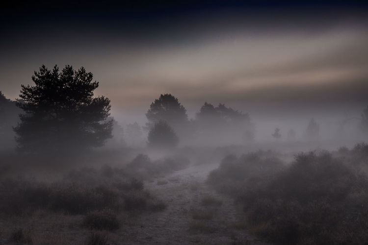 foggy morning Sunrise Photography Fotografie Grensparkdezoomkalmthoutseheide Kalmthoutseheide Grensparkkalmthoutseheide Heide Tree Fog Forest Tree Area Beauty Pine Tree Pinaceae Cold Temperature Morning Mountain