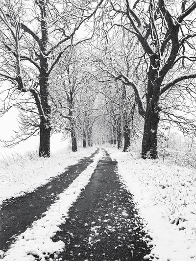 Snow Snow ❄ Snow Way Auvergne AuvergneRhoneAlpes Myauvergne Bare Tree Winter Tree Snow The Way Forward Cold Temperature Nature Beauty In Nature Outdoors Branch Day Tranquility No People Landscape