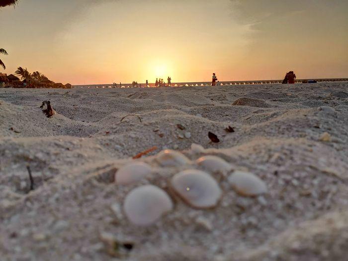 Beach Sunset Manual Worker Men Working Sand Beach Occupation Sky Sand Dune