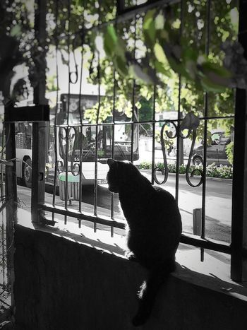 Cat Black City Green