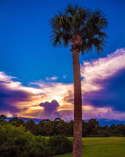 Florida Evenings Palm Tree Tree Trunk Sky Tree Cloud - Sky Beauty In Nature Tranquility Nature Scenics Blue Sunset Low Angle View Outdoors Growth No People Travel Destinations Day