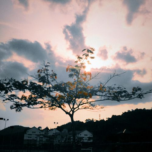 Sunshine Sunset Vscocam Xperiaz Flowerporn Clouds And Sky Sky And Clouds Malaysia Nature Sunny First Eyeem Photo