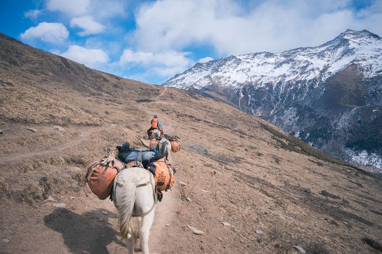 Man riding horse on mountain against sky
