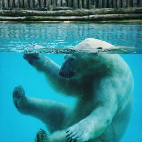 Plaisir de l'eau ! Ours Zoo Amnéville