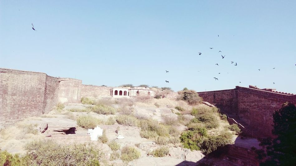 Fort Heritage Site Heritage Building Hilly Area Green Rocky Birds Flying Looking Up Picnic Point Picnic Spot Mobile Photography SSClicks SSClickpix SSClickPics Landscape