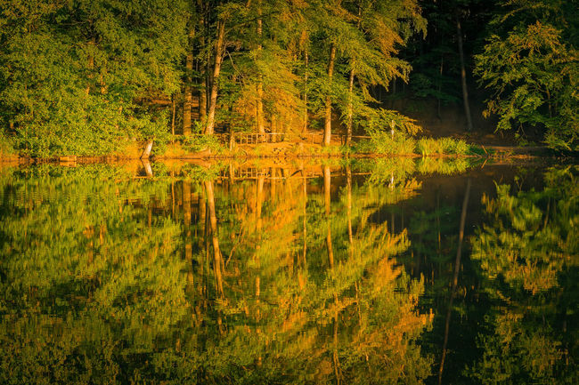 Trees are reflected in the water late summer autumn Natural Spectacle Evening Light Water Reflections Beauty In Nature Reflections In The Water Romantic Sky Scenics - Nature Trees And Nature
