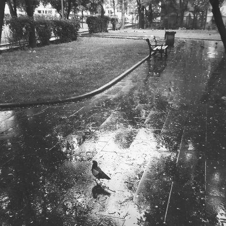 Bnw Rain Yağmur VSCO