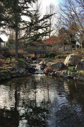 Lewis Ginter Botanical Gardens Reflection Nature RVA IPhoneography Lewis Ginter Botanical Gardens Tea House