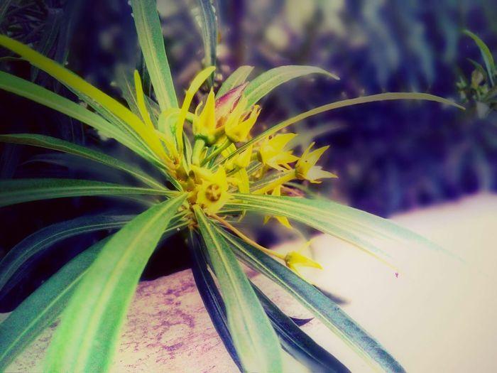 Terrace Flower