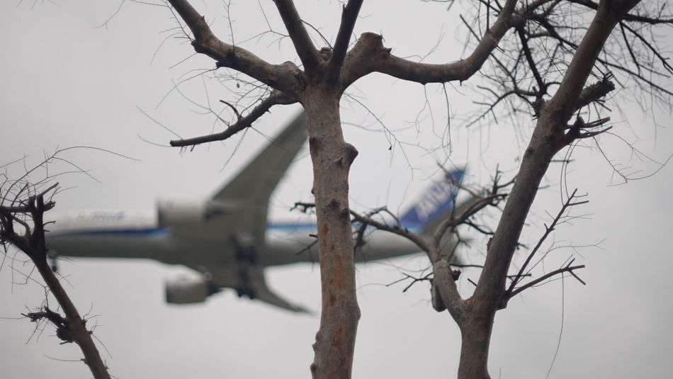 Enjoy The New Normal Cold Temperature Sky Bare Tree Branch Tree Trunk Nature Winter Tree Flightclub Journey Airplane Take Off Fragility Flying Adventure Air Vehicle Flight Finding New Frontiers Close Up Technology Adapted To The City Let's Go. Together.