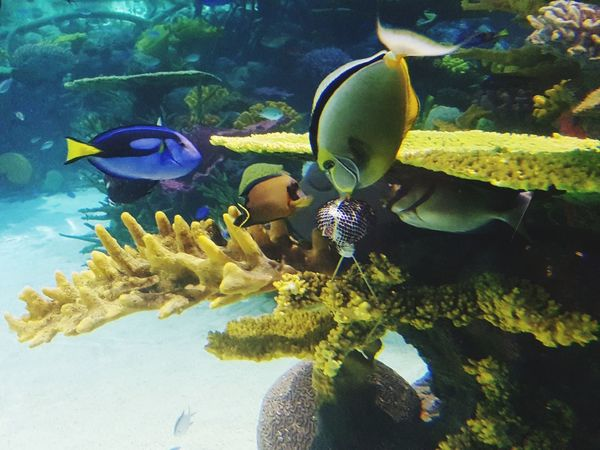 Underwater Fish Sea Life Animals In The Wild Water Sea Large Group Of Animals No People Nature Animal Themes Beauty In Nature
