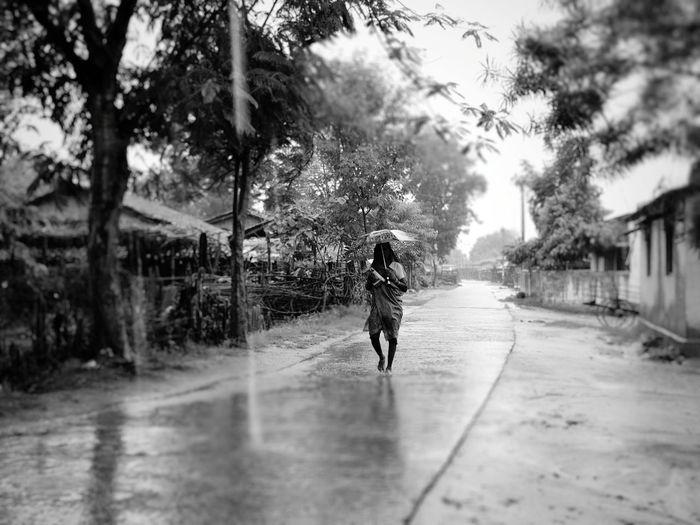 Tree Water Childhood Child Wet Protection Full Length Rain Sky Monsoon Drop Water Drop Rainy Season Weather Umbrella