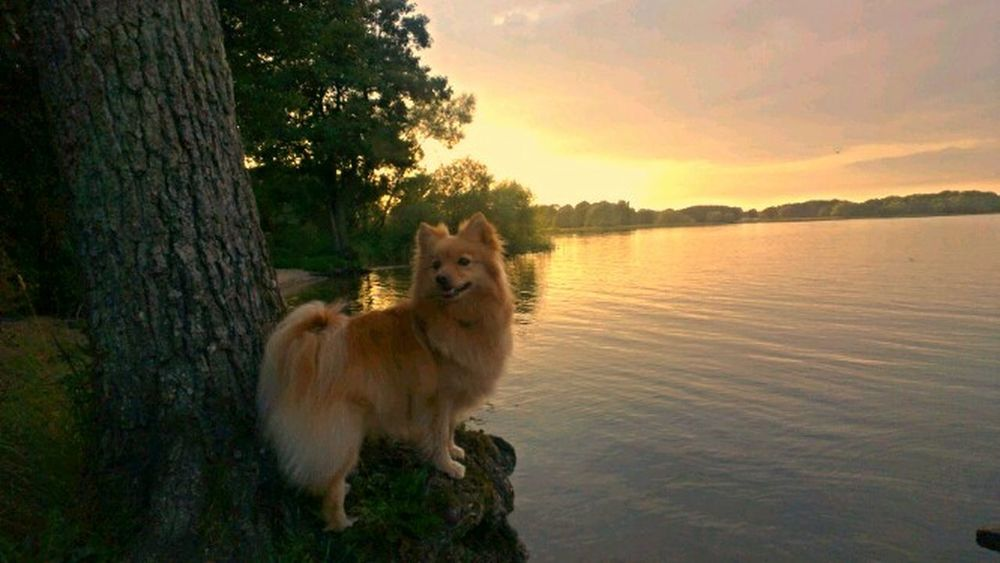 My love is watching the sunset :) Enjoying Life