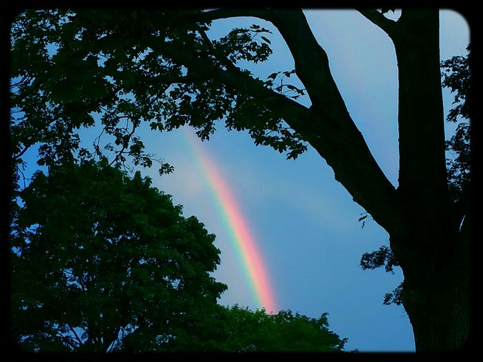 I captured a rainbow yesterday in-between trees. KimberlyJTilley