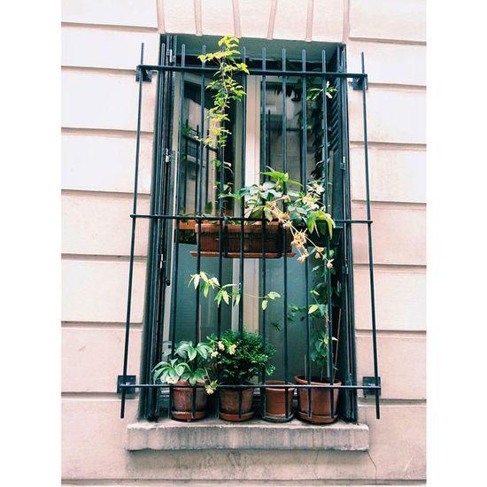 Window Streetphotography Greenplants
