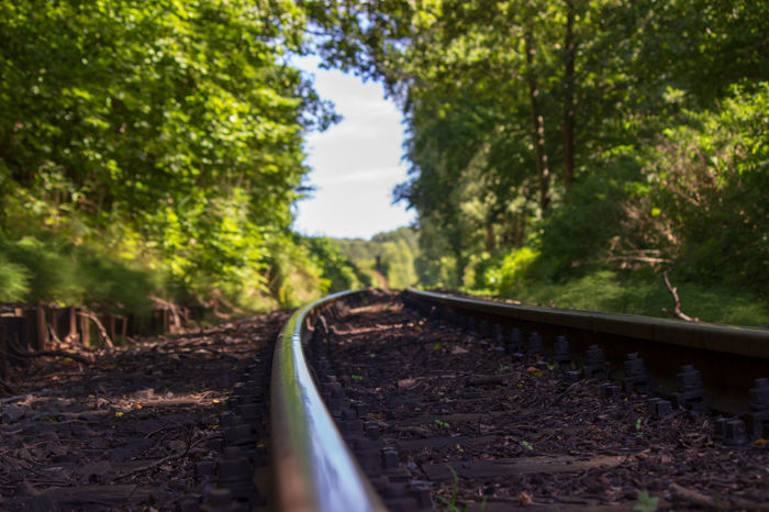 Tree Plant Transportation Rail Transportation Track Nature Railroad Track Day Growth Land Direction No People Selective Focus The Way Forward Forest Metal Mode Of Transportation Outdoors Tranquility Motion Diminishing Perspective Surface Level Rasender Roland