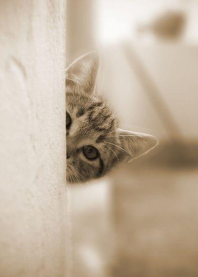 I'm hiding