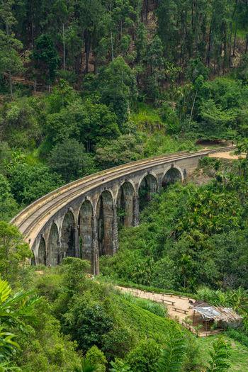 Arch bridge in forest
