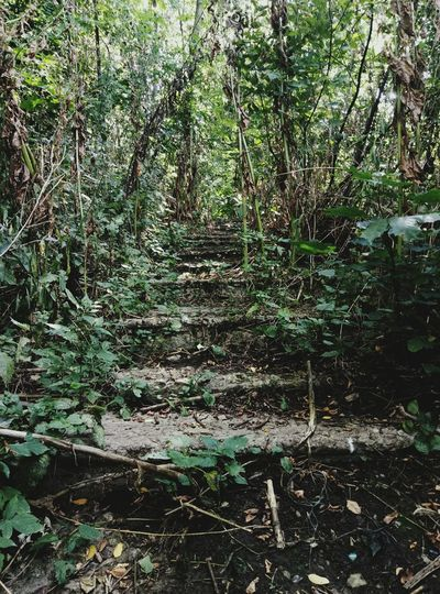 Growth Nature Day Outdoors No People Tree Plant Forest Beauty In Nature Close-up Stairs