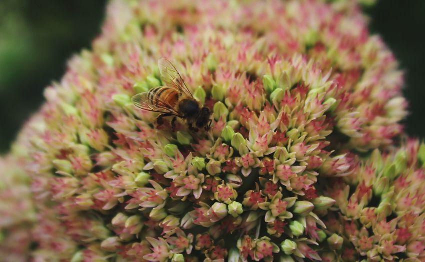 Bees Nature EyeEm Nature Lover Naturelovers Urban Gardening