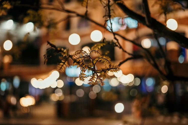 Close-up of tree in illuminated city at night