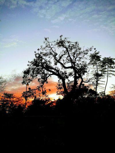 Atardecer 💚 Tree Sunset Sky Cloud - Sky
