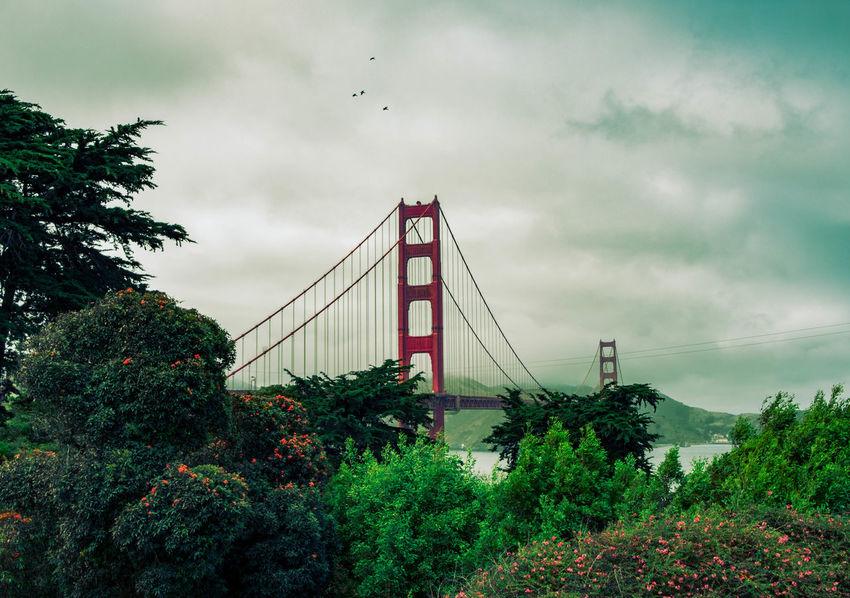 Golden Gate Bridge City Suspension Bridge Bridge - Man Made Structure Tree Red Storm Cloud Sky Architecture Built Structure Cloud - Sky Engineering