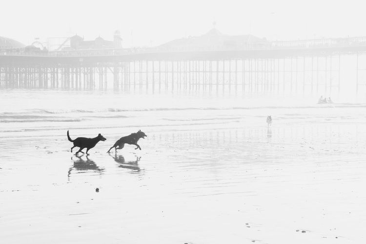 Dog Animal Themes Nature Domestic Animals Water No People Pets Sea Outdoors Sky Beauty In Nature Brighton Pier Pier Brighton Pier UK Beach Sunset Wave Tranquility Scenics Brighton Brighton Beach Coastline Light And Shadow Darkness And Light Contrast