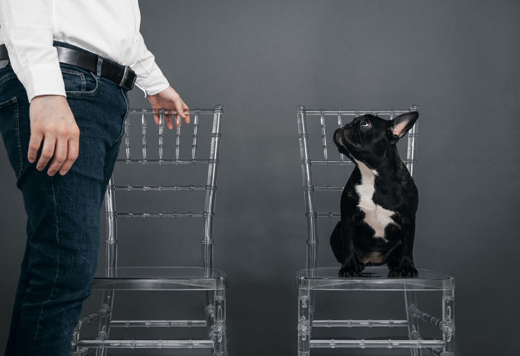 Excuse me, Miss, is this seat taken? Looking Up Profile View Chairs Frenchie French Bulldog Frenchbulldog Pets Animal Themes Animal One Animal One Man Only Men Transparent Human Hand Standing Men Midsection Low Section Body Part Personal Perspective