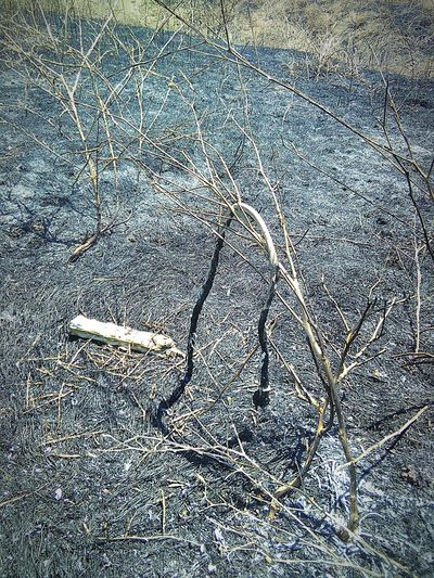 Power Outlet Cord Walking Around Taking Photos ❤ Trail Sacramento, California 43 Golden Moments Fire Scorched Grass Nature