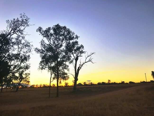 Outback. Tree Landscape Nature Beauty In Nature Scenics Field Tranquil Scene Tranquility Sunset Sky No People Growth Outdoors Clear Sky Day
