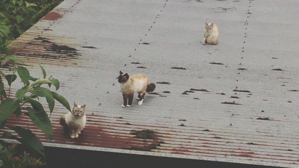 Landscape Cat Animal Love Sur Le Toit