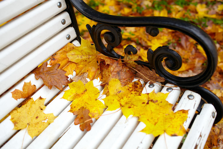 High Angle View Of Fallen Autumn Leaves On Bench