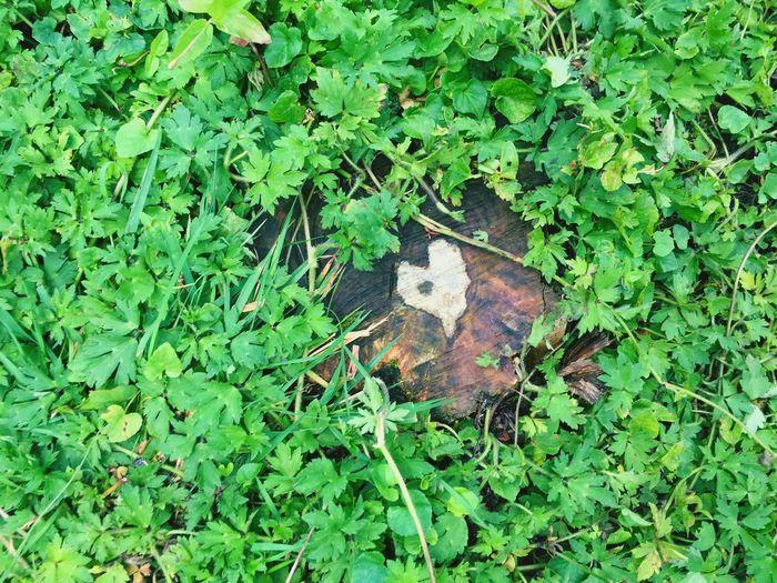 Nature is so beautiful ❤️ Beautiful Nature Woodheart Green Nature First Eyeem Photo