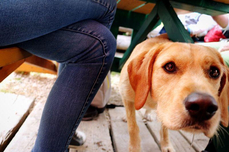 Auf Augenhöhe Dog Portrait Hundegesicht Under Table Dog