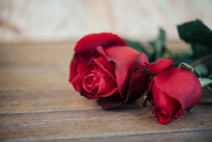 Beauty In Nature Close-up Day Flower Flower Head Fragility Freshness Indoors  Nature No People Petal Red Rose - Flower Rose Petals Table