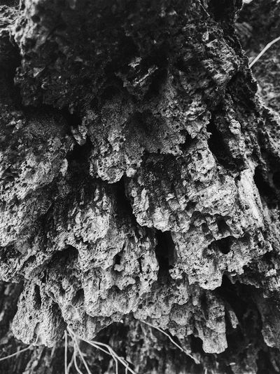 Black & White Textured  Tree Trunk Close-up Rough Bark Outdoors Layers And Textures Abstract Nature Dead Tree Textured  Driftwood Pattern Shapes In Nature  Abstractions In Nature Full Frame