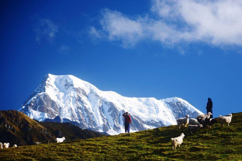 Himalayan life