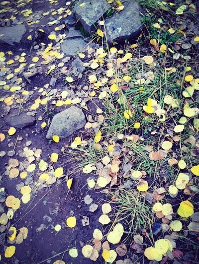 High angle view of autumnal leaves on ground