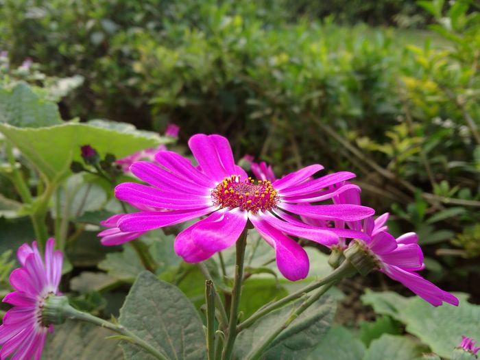 Flower Pink Firstpicture Wildflower Mobile Motog3 First Eyeem Photo