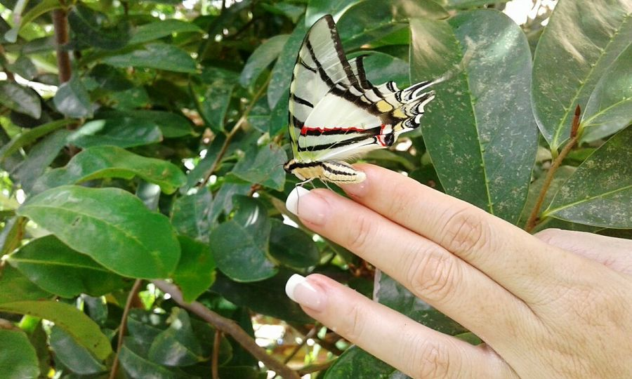 Human Hand Human Body Part Animal Themes One Person Majestic Butterflys Beauty In Nature Nature Day Tranquility Tranquil Scene One Animal Green Color Handy Photo Ruth Adults Only Nature Adult Butterflycatchers Butterfly Nature Macro