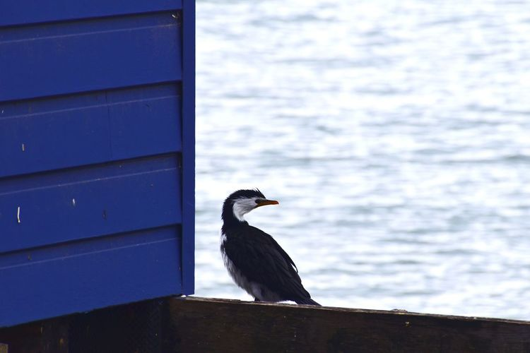 Side view of bird perching on railing against sea