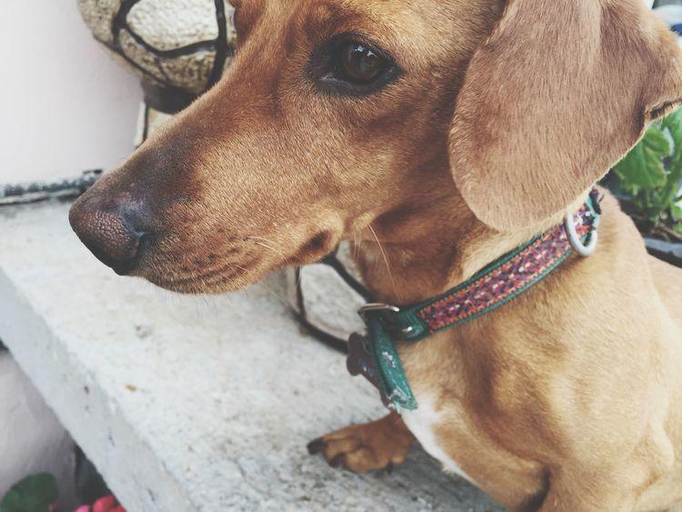 Love Amazona Dog