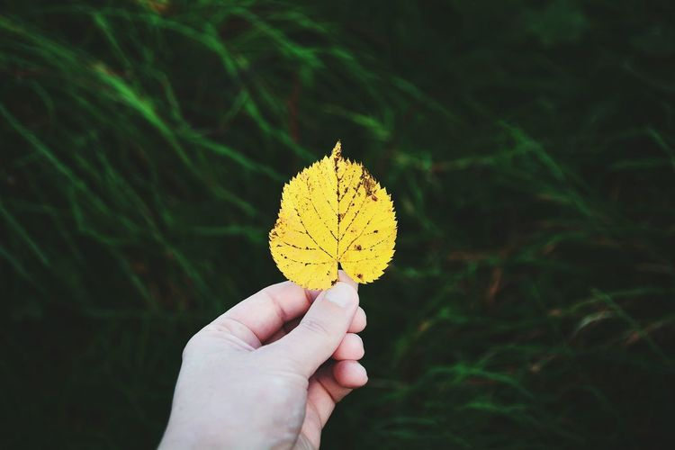 Yellow Flower Leaf Leaves Beauty In Nature Green Color Nature Outdoors Personal Perspective Holding Focus On Foreground Day Green Eyeem Photography EyeEm Best Edits EyeEmBestPics EyeEm Gallery Photography Colors Of Autumn Autumn