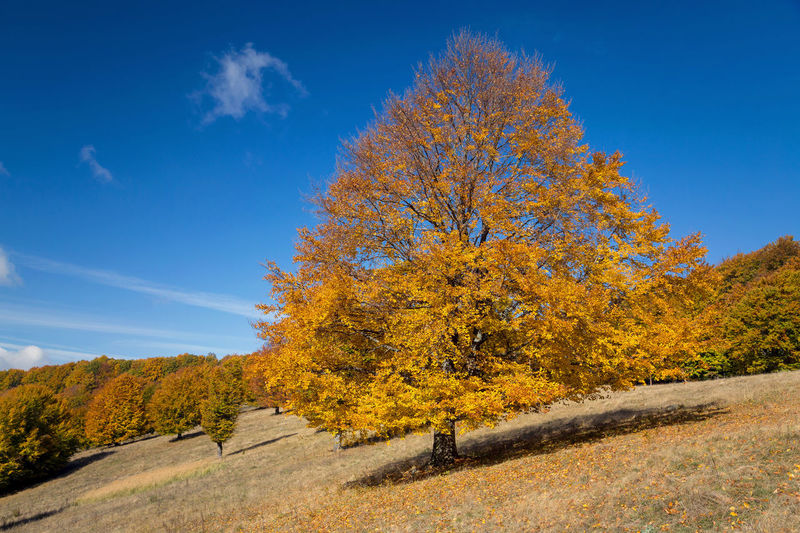 Autumn tree on landscape against blue sky