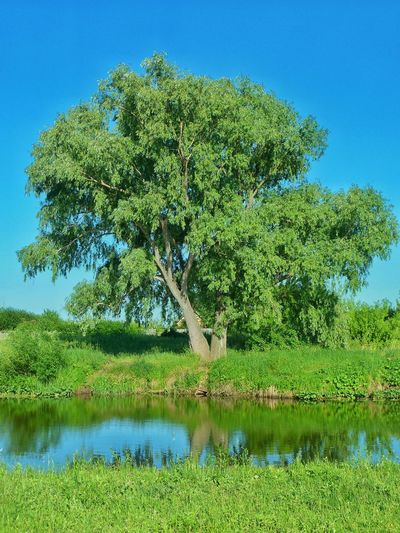 Tree Alone Tree Nature Nature_collection Eyyem Green Russia