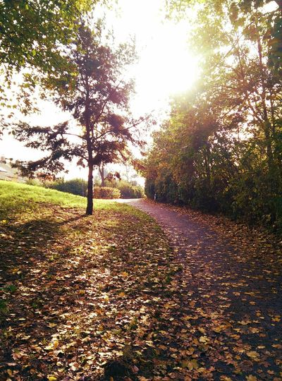 Mittags ein normaler Herbst Tag Noon an ordinary Autumn Day