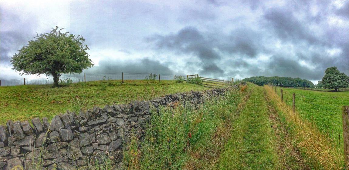 Walking to work Peak District  Buxton Trees Drystonewall Copse Bridlepaths