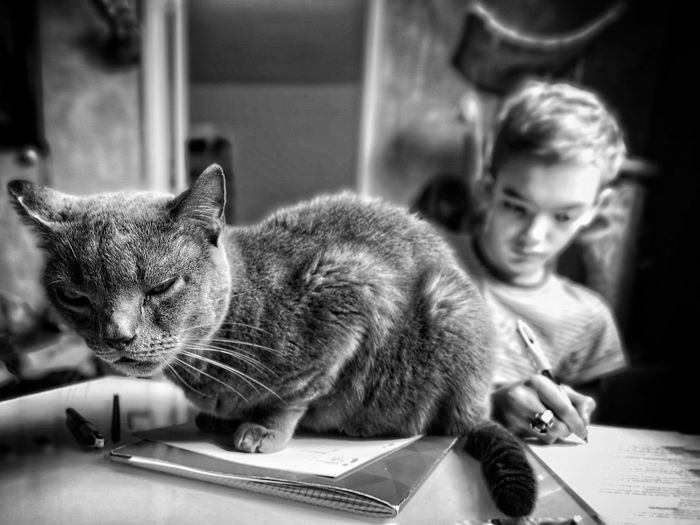 Cat & child Young Children Photography Cat & Human Smartphonephotography Cat Lovers Chartreux Pets Child Domestic Cat Childhood Table Feline Monochrome It's About The Journey